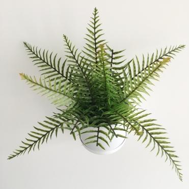 fern close up