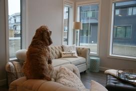 living room rio